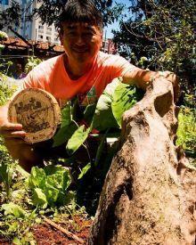 Lithopuntura, acupuntura na terra com pedra natural, estabiliza a bioeletrica do solo dando mais vitalidade nas plantas.
